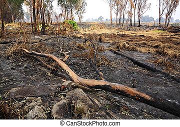 fuego, después, bosque