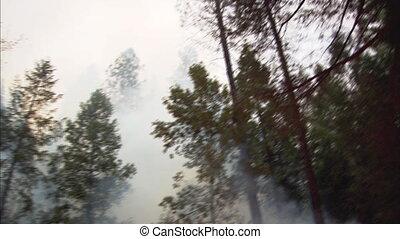 fuego, incline abajo, 2, bosque, cacerola