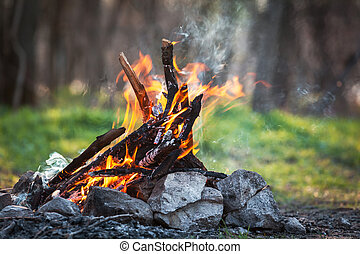 fuego, primavera, forest., hoguera, carbones