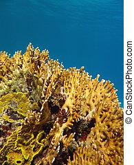 fuego, submarino, barrera coralina, coral