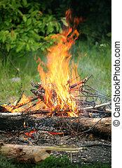 fuego, verano, campfire, bosque, hoguera