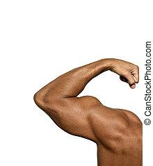 fuerte, bíceps, en, un, fondo blanco