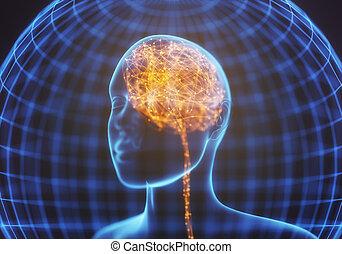 fuerte, mente, cerebro, radiografía