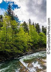 fuerte, montaña, río, y, bosque, en, un, acantilado