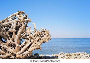 fuerte, raíz
