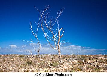 Fuerteventura, dry tree