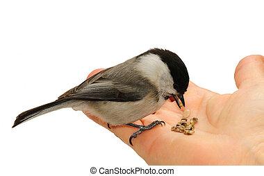 fugl, hånd