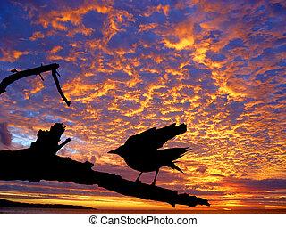 fugl, imod, solnedgang