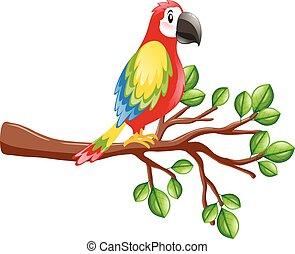 fugl, papegøje, branch