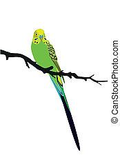 fugl, papegøje