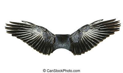 fugl, vinger