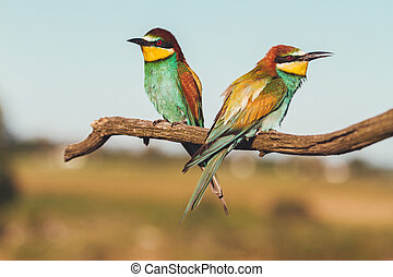 fugle, branch, eksotiske, his