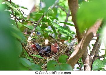 fugle, venter, by, den, mor, til fodr