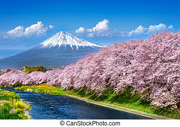 Fuji mountains and cherry blossoms in spring, Japan.