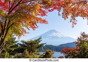 Fujisan with maple tree