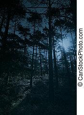 fulde, skov, måne