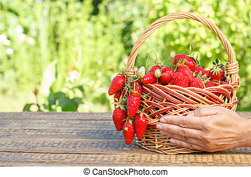 Full basket with just picked fresh red ripe strawberries and female hand holding it.
