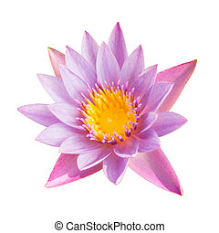 Full bloom lotus flower isolated on white with clipping path