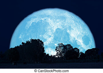 full buck moon on night sky back over silhouette forest