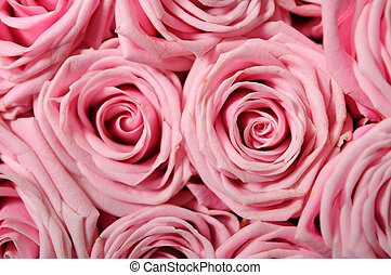 Full frame background of pink-roses