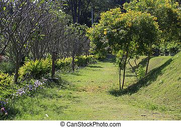 Full frame of garden, backyard tree, outdoor.