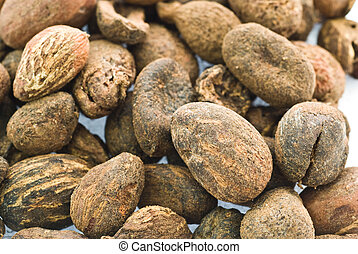 shea nuts - full frame shea nuts texture
