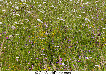full frame shot showing a wildflower meadow