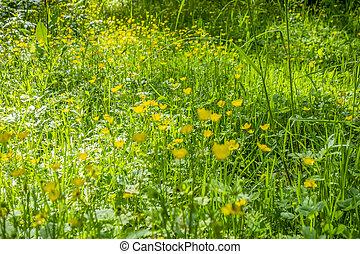 full frame sunny illuminated wildflower meadow closeup