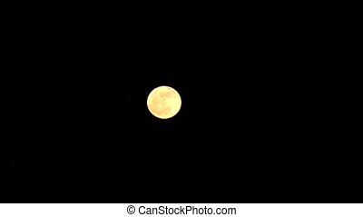 full harvest moon moving up on the clear night sky