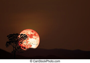 Full harvest orange moon and silhouette birds flying over dry trees in the night sky