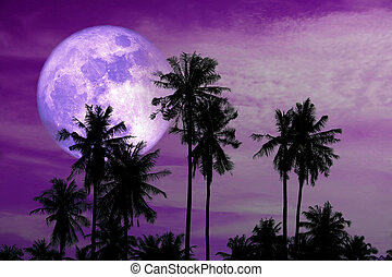 full harvest purple moon on sky and silhouette coconut palm trees