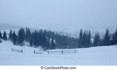 (full, hd), neige, tomber, forêt