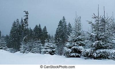 (full, hd), sneeuw, het vallen, bos
