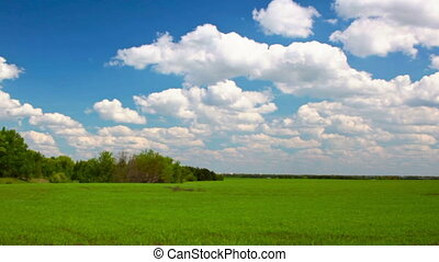 Full HD video of green field and blue sky