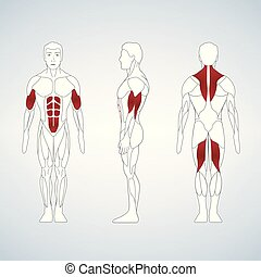 Full length muscle body, front, back view of a standing man