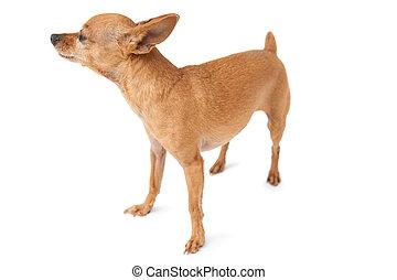 Full length of a pet dog