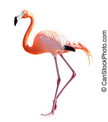 Full Length of Flamingo over white background