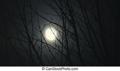 Full Moon at Night Trees