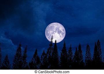 full moon back silhouette pine in dark night sky