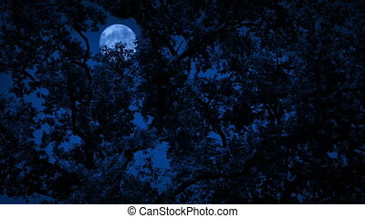 Full Moon Behind Dense Tree Foliage - Moon behind the trees...