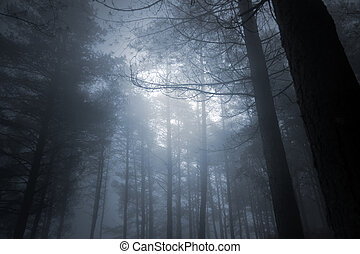 Mysterious foggy full moon forest