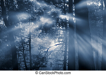 Full moon forest - mysterious forest on a full moon misty...
