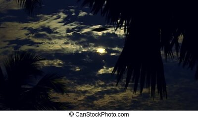 Full Moon In Palm Trees.