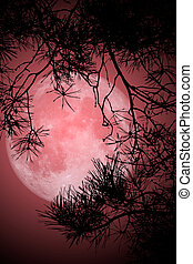 This image shows a night with full moon