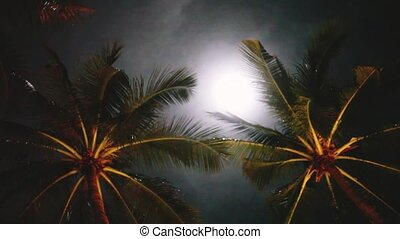 Full moon on a tropical night, palm trees on the night sky background. 1920x1080