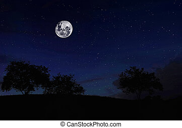 Full Moon on the Forest - Starry skies and a full moon over...