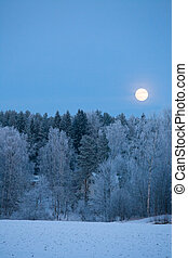Full moon over frost covered forest