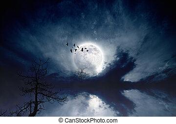 Full moon - Night sky with full moon, flock of flying...