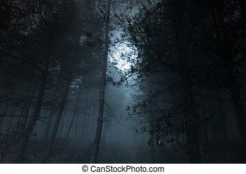 Full moon pinewood - Mysterious foggy full moon pinewood