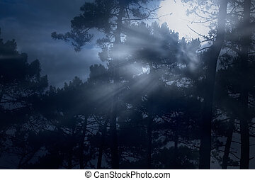 Full moon rising in a misty forest
